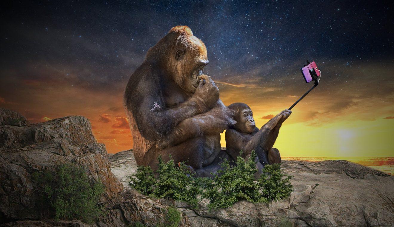 monkey-3554261_1920
