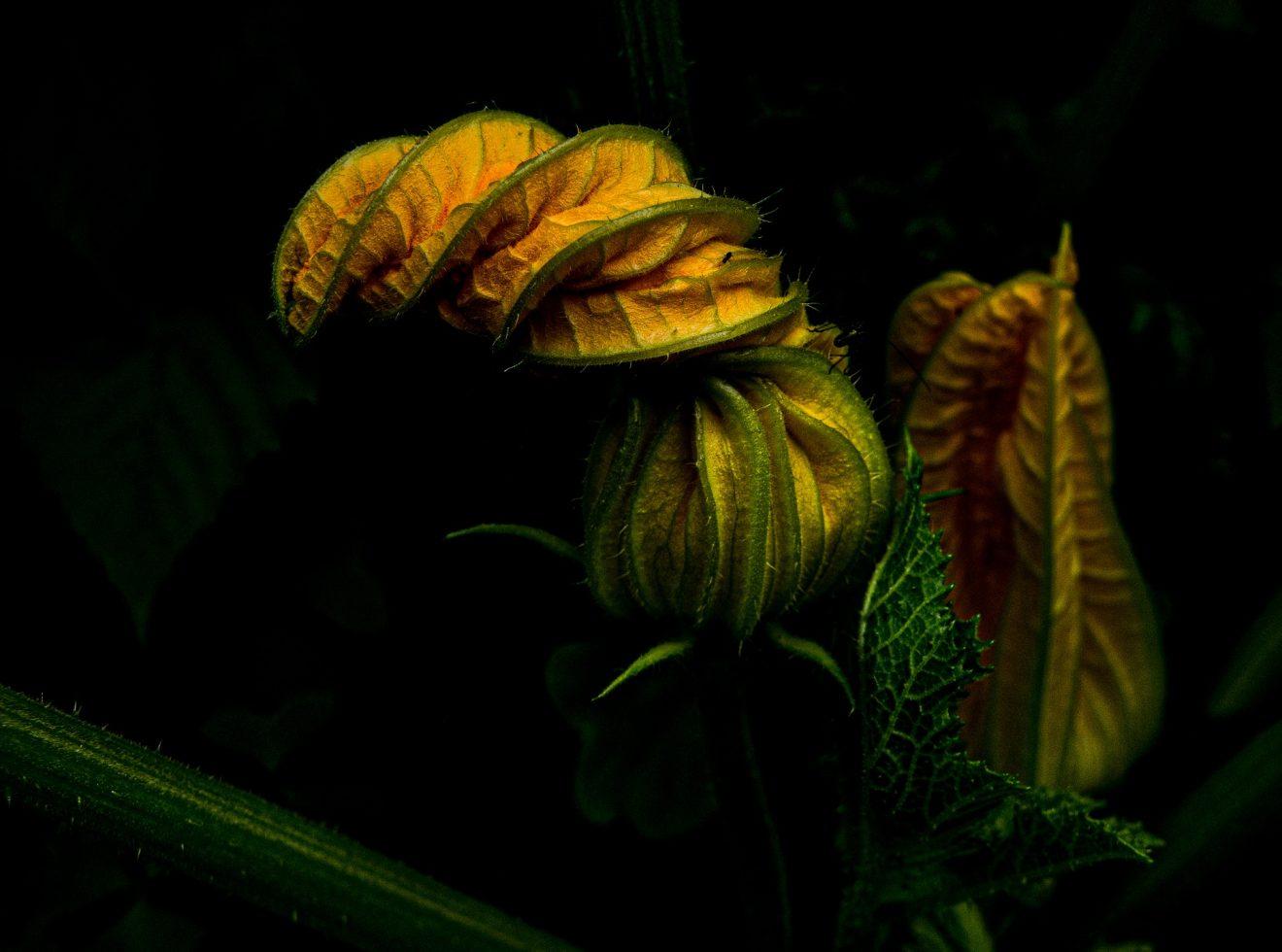 zucchini-5263781_1920