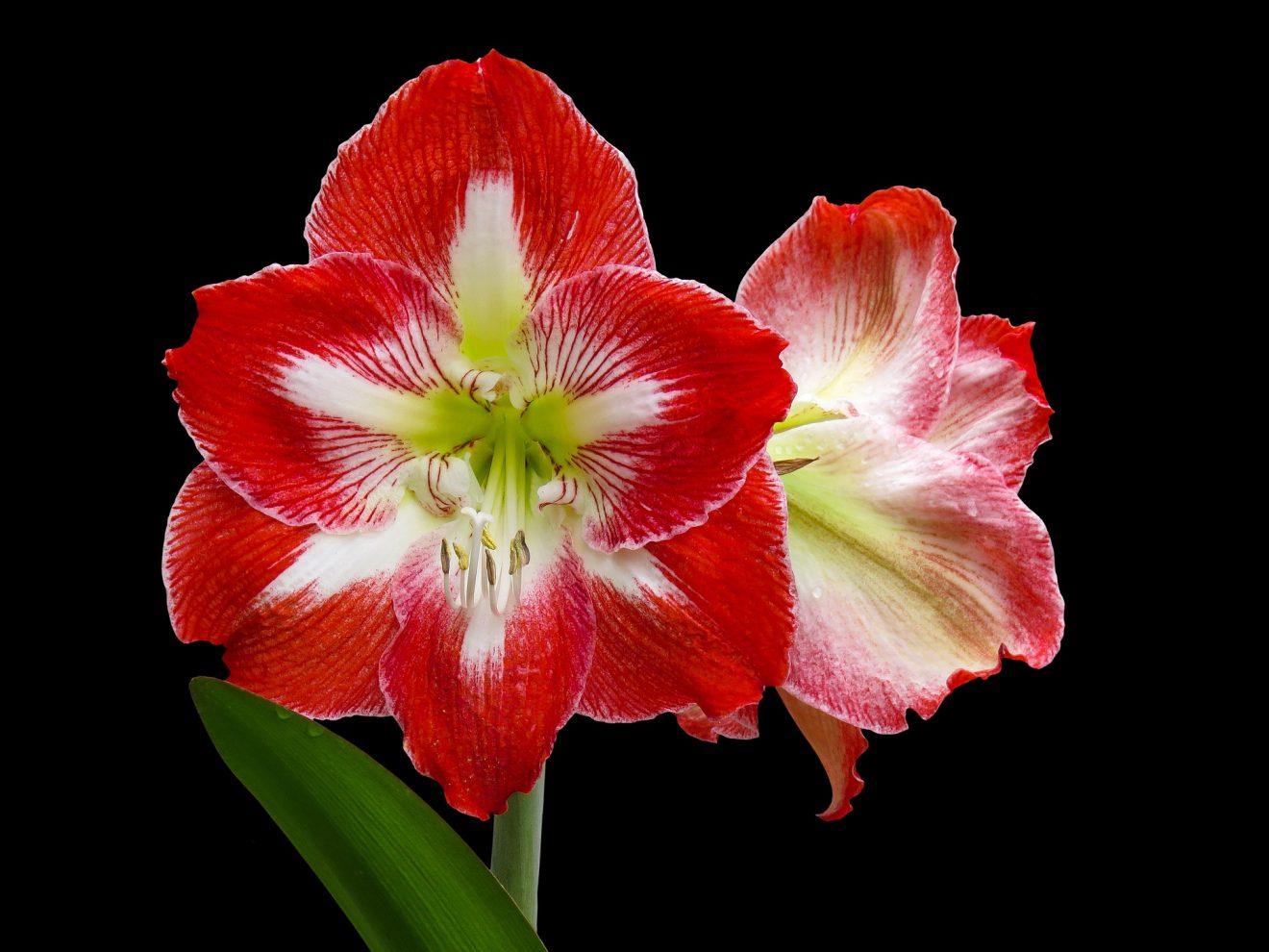 flower-3254335_1920