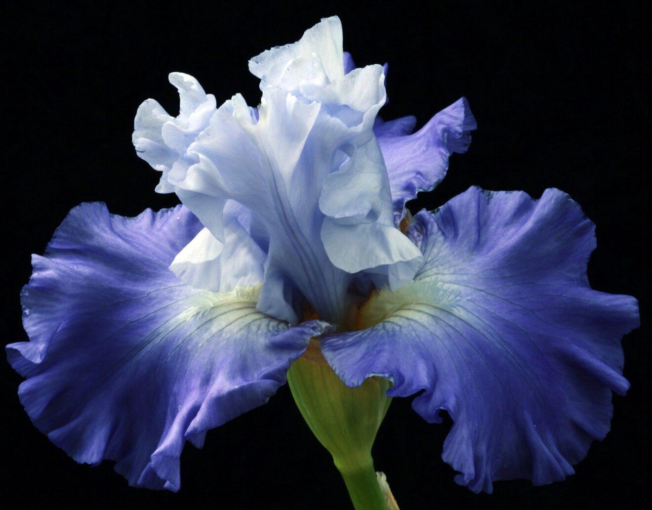 blossom-5356482_1920