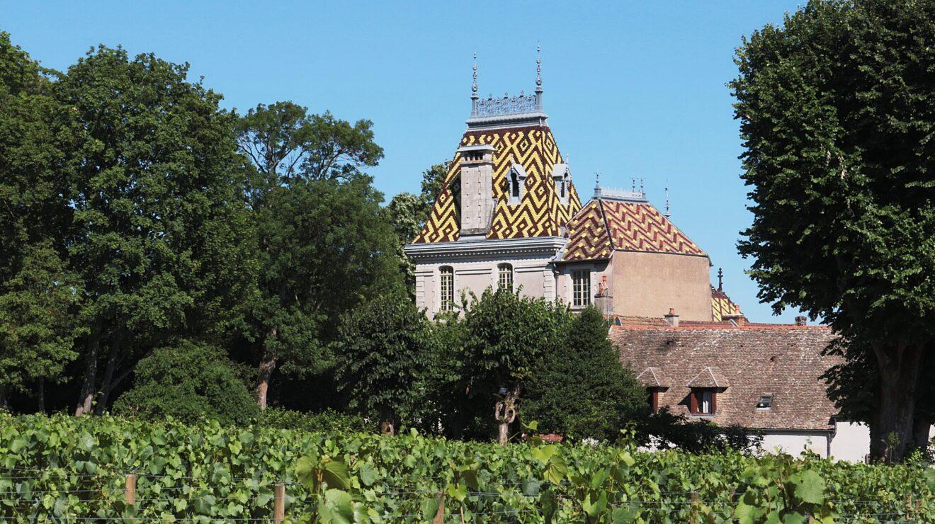 vineyard-374386_1920